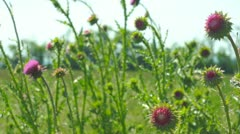 Spring meadow Stock Footage