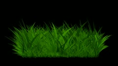 The growth of grass Stock Footage