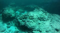 Scuba diver colorful reef fish on rocks reef HD 0047 Stock Footage