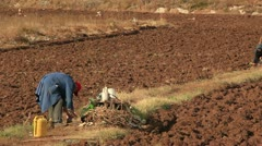 Plowing the field Stock Footage
