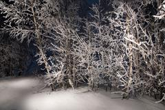 Lone trees in snowy woods..a wintry forest at night. Stock Photos