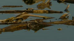 Driftwood in river Stock Footage
