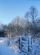Honiton moors in winter.jpg - stock photo