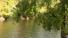 River through trees Stock Footage