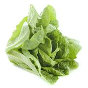 romaine lettuce - stock photo