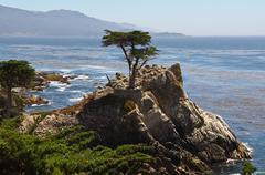 lone cypress tree - stock photo
