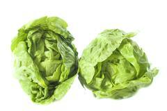 two sucrine salad - stock photo