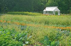 Little greenhouse in a vegetable garden Stock Photos