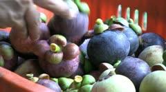 Asian Farmer Picking Ripe Mangosteen Fruit Stock Footage