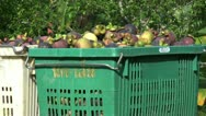 Stock Video Footage of Cart With Containers Full Of Ripe Mangosteen Fruit-Zoom
