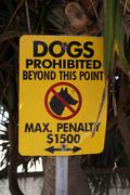 dog prohibited - stock photo
