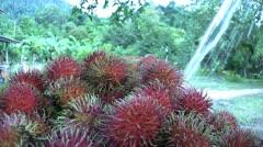 Asian Farmer Sprays Freshly Picked Rambutan-Low Angle Stock Footage