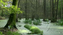 Marshy Landcsape in Mecklenburg - Baltic Sea, Northern Germany Stock Footage