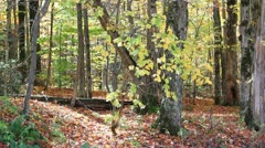 Hardwood forest in fall Stock Footage