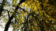 Autumn colours (Tilt/Shift)2 Stock Footage