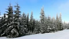 Winter trees under snow Stock Footage