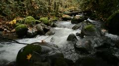 Small Stream Autumn 03 Stock Footage