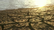 Stock Video Footage of Sparkling Sun Cracked Mud Landscape