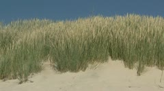 Beach Grass at the Baltic Sea - Northern Germany Stock Footage