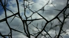 Close Up of Thorns 2 - stock footage