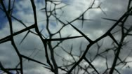 Close Up of Thorns 2 Stock Footage