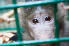 Apinalla eläintarhassa häkin Kuvituskuvat
