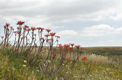invasive exotic plants - stock photo