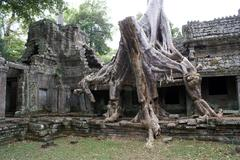 temple and tree with roots - stock photo