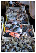 Fish Head Selection in NYC Stock Photos