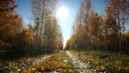 Autumn dolly 005 Stock Footage