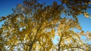Autumn dolly 010 1 Stock Footage