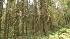 P02306 Rain Forest at Olympic National Park Stock Footage