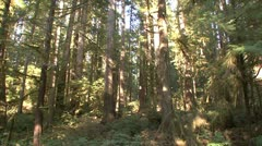 P02311 Olympic National Park Pacific Northwest Rainforest Stock Footage