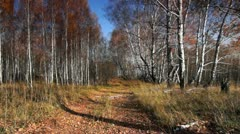 Autumn in motion 005 - stock footage