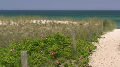 Beach Access with Wild Roses at the Baltic Sea - Northern Germany Stock Footage