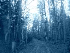 Mystic Forest Road.JPG - stock photo