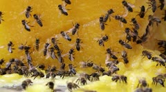Bees and honey Stock Footage