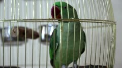 Green parrot - stock footage