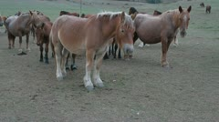 Horses one Stock Footage