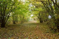 Hazel path in autumn Stock Photos