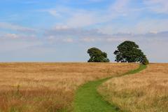 Grass path Stock Photos