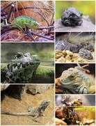 Reptiles and amphibians Stock Photos