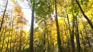 Stock Video Footage of autumn walk in the woods