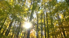 Autumn trees driveby Stock Footage