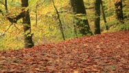 Adventurer in the forest Stock Footage