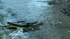 Monsoon Puddle - stock footage