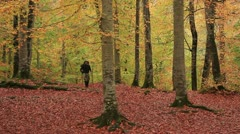 adventurer in the forest - stock footage
