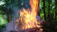 Pile of branches burning in forest Stock Footage