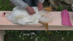 Woman in farm pick dead goose feathers Stock Footage