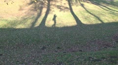 Videographers shadow walking in autumn park Stock Footage